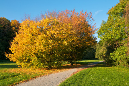 broadleaved tree: Autumnal-colored deciduous trees on sunny day in a park; Autumn Impressions