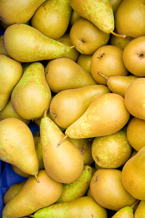 freshly picked: Top view of Freshly picked yellow pears in a box - sweet and juicy