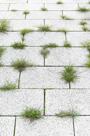 Weeds in pavement joints; Weed Control