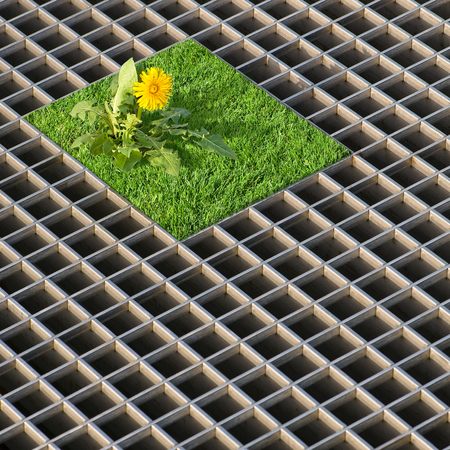 sod: Unusual living conditions; Lone fighter; Dandelion on a small piece of sod in a floor grid