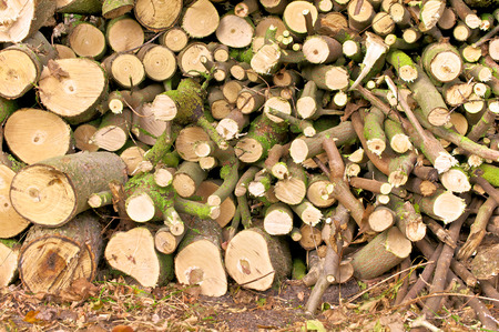 cut off saw: Piled branches and twigs of varying thickness; Waste of annual tree pruning