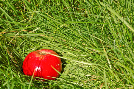 Shiny red apple in green meadow; Red-green color contrast Stock Photo