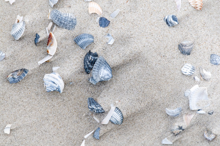 superficial: Broken sea shells in the sand.
