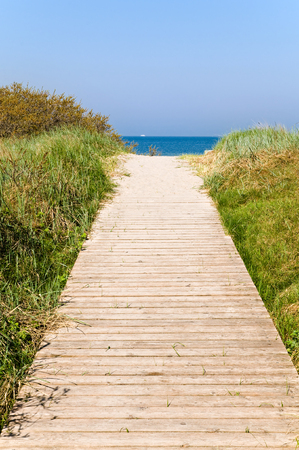 Way of wooden planks through dunes with marram grass and sea buckthorn at Baltic Sea coast