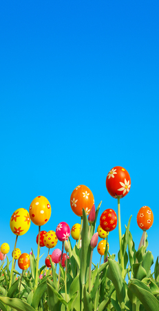 din: Special breeding of Easter tulips; Tulips with extraordinary flowerheads against clear blue sky Stock Photo