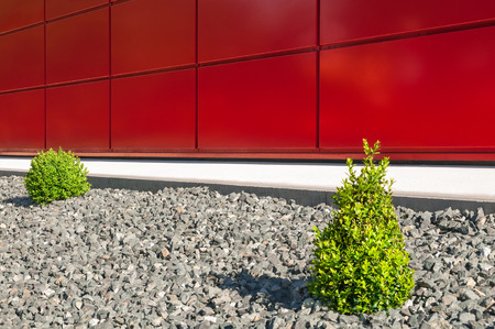 Decorative gravel bed with small box trees in front of red wall; Modern garden design; low maintenance