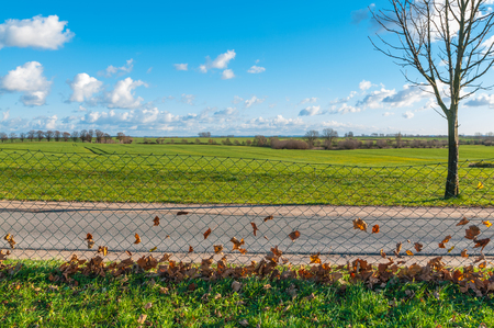 bare wire: Paved road through agricultural landscape in late autumn; Dry leaves in wire mesh fence along a road; Wide and flat landscape with fields and bare trees