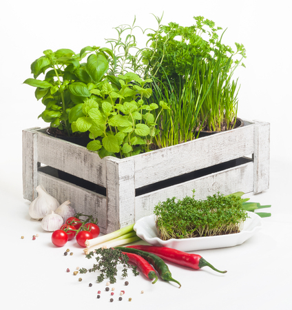 Aromatic herbs and spices for vegetarian cuisine; Spicy greens; Colorful mixed herb garden for balanced nutrition; Potted plants, ever-fresh