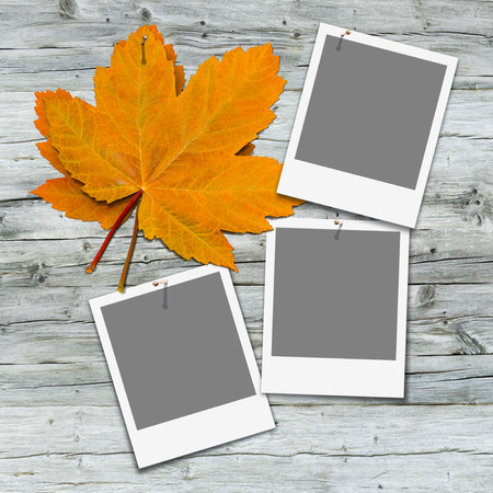 nailed: Two orange maple leaves and three blank instant pictures pinned on gray wooden wall; Insert your favorite snapshots