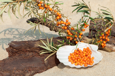 sourness: Decorative arrangement of sea buckthorn twigs and berries, driftwood and white shell on the sand Stock Photo