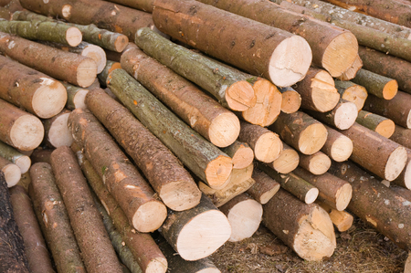 lumber mill: Tree trunks; Wood processing industry; Forestry; Woodworking