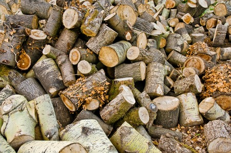 woodburner: Stock of firewood; Sawed tree trunks and branches; Wookworking; Forestry Stock Photo