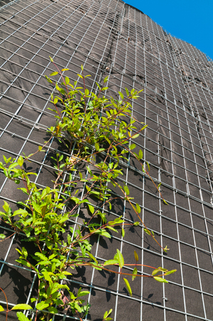 garden city: Vertical greenery; Plants growing on wire mesh boxes; City greening; Climbing plants at housefront