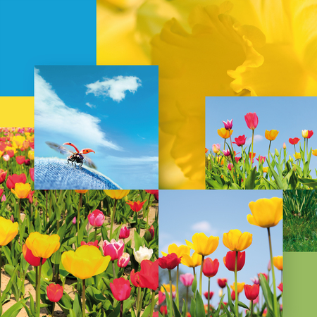Spring greetings; Photo composition of different spring motifs; Colors of spring
