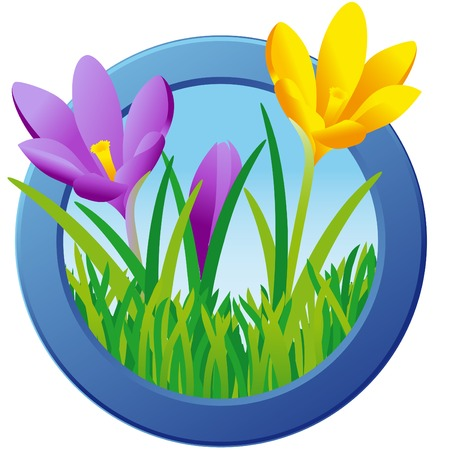 rimmed: Vector graphic of spring motif; Illustration of crocuses in green grass rimmed with blue frame; Spring flowers
