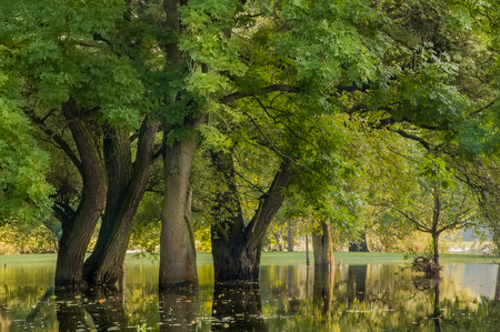 unstoppable: Flooded local recreation area with old trees; High water in springtime; landscape submerged in water Stock Photo