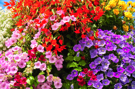 floridity: Blooming balcony flowers in different colors; Pink, red and yellow blossoms