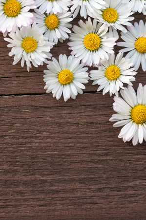 cull: Bellis perennis blossoms on dark brown wooden background with space for tect; Greeting card; Mothers Day; Spring greetings