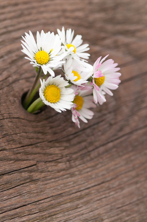 Six daisy in a small hole of a wooden board; Little flower bouquet of wildflowers; Birthday greeting card; Mothers Day Stock Photo