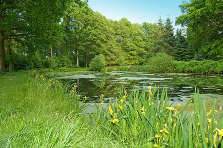 Local recreation area with a small fish pond within mixed woodland; Frog pond with duckweed and flowering irises in forest; Wetland habitat