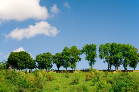 shrubbery: Line of deciduous trees on hill against blue sky with some clouds; Summery landscape