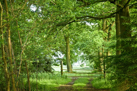 Unpaved forest path to a pasture; Agricultural private property; With a closed gateway to a meadow Stock Photo