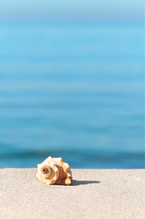 Single sea snail shell on sandy beach in sunlight against blue water; Maritime holiday postcard motif; Beach holiday greetings