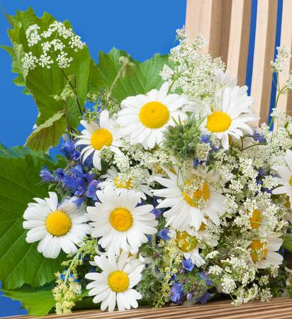 Bos van wilde zomerbloemen en groene bladeren tegen blauwe achtergrond; Bloemboeket met de bloesems van het osseemadeliefje; Leucanthemum vulgare Stockfoto