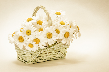 Little wicker basket with oxeye daisyblossoms - sepia toned picture; Greeting card for bithday or Mothers Day; Bunch of marguerites Stok Fotoğraf