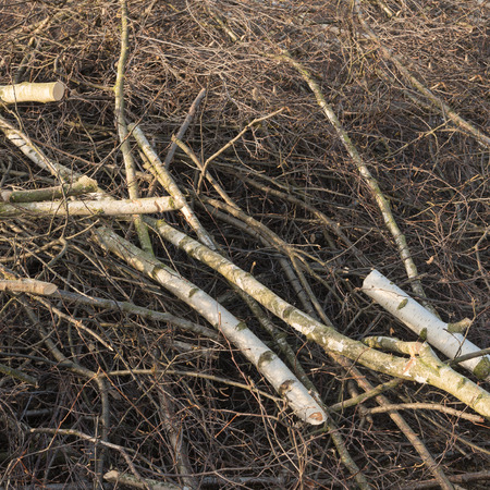 cuttings: Pile of sawn birch branches and twigs; Garden works; Tree pruning; Tree thinning Stock Photo