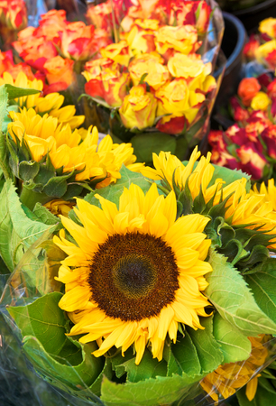 Bunches of sunflowers and roses wrapped in cellophane; Offer at flower market; Bundles of cut flowers; Sale of summer flowers