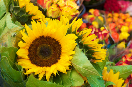 Bunches of sunflowers and roses in clear plastic sleeves; Offer at flower trade; Floristry; Flower market