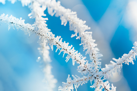 Thin ice spikes in sunlight on stalks against blue background; Ice crystals on stems in close up; Beautiful winter impression; Enchanted nature in wintertime