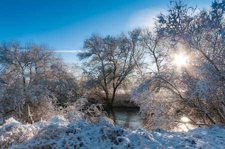 Beautiful winter landscape with trees covered by snow at sunny day with blue sky; Christmas card motif; Sunrise on frosty winter morning
