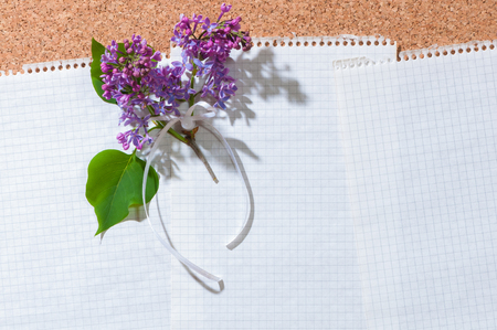 Sheet of graph paper pinned on cork board and decorated with twig of common lilac and ribbon bow; Space for messages and notes in landscape format Standard-Bild