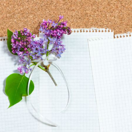 Sheets of white checkered paper on cork board, decorated with twig of common lilac; Greetings for Mothers Day Stock Photo