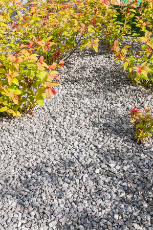 Garden area with bright gravel for ground covering between small spirea shrubs; Weed control with ground cover; Graveled garden bed with ornamental shrubs
