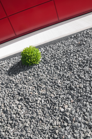 Puristic horticulture with gravel bed and evergreen shrub in sunlight in front of modern red house facade; Modern, easy-care garden