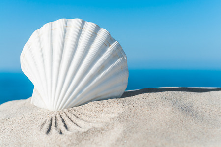 White scallop shell in the sand against blue ocean and sky - landscape format; Holiday memories; Holiday greetings; White seashell in sunlight on the beach