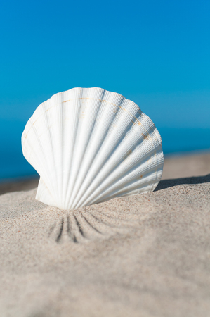 White seashell in the sand against blue sky in upright format; Holiday memories; White scallop shell in sunlight on the beach; Holiday greetings