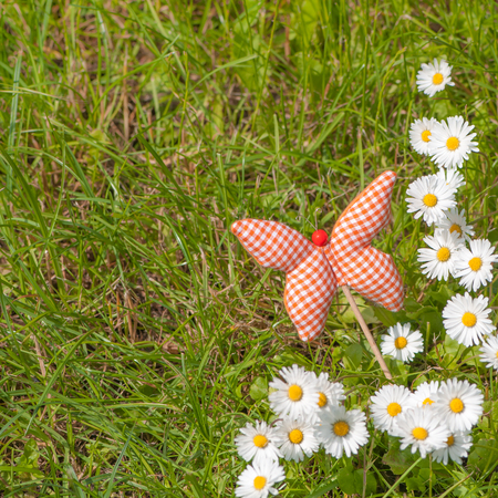 Green grass with flowering daisies and hand made textile butterfly in closeup; Spring meadow with wild flowers and butterfly Standard-Bild