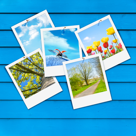 Five snapshots with vernal motifs on blue wooden wall; Wall of azure planks with springlike instant pictures; Spring messengers