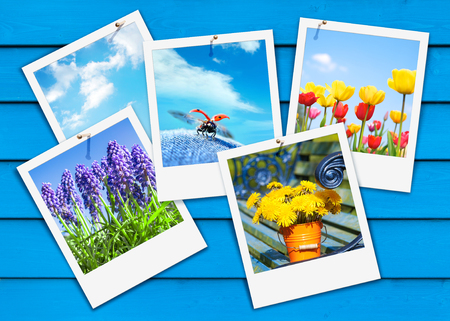Five instant pictures with spring flowers and vernal motifs on blue wooden background; Spring greetings; Snapshots with different spring flowers and ladybugs on blue wooden boards Standard-Bild