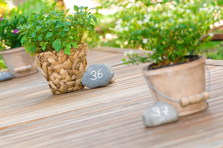 Wooden table with potted plants in decorative planters and table numbers on gray stones; Equipment for outdoor gastronomy; Number thirty-six; Table decoration in garden restaurant Imagens