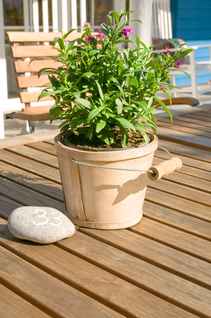 Flowering pot plant in decorative planters on wooden table on terrace of restaurant; Table number thirty-three; Table decoration; Outdoor furniture of restaurant