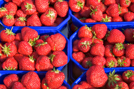 Ripe red strawberries in blue plastic containers; Popular sweet red fruits; Offer at farmers market; Packaging of delicate fruits