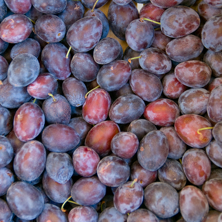 Ripe plums - view from above; Fruits of late summer; Sweet and juicy stone fruit; Ingredients for fruitcake Standard-Bild