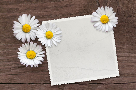 Four daisies on vintage blank picture on dark brown wooden background; White wild flowers on a wooden board in top view; Insert your favorite picture motif