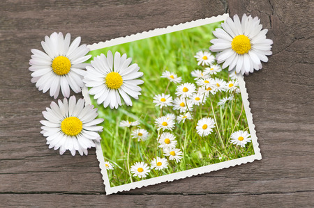 Picture of lawn decorated with blossoms on brown wooden background; Spring greetings; White wild flowers