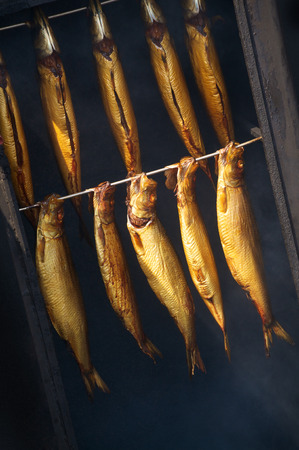 10 golden mackerels in fish smoker in closeup; Smoked fish; Delicious fish specialty;